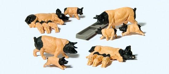 Schwäbisch Hällische Schweine