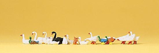 Enten, Gänse und Schwäne